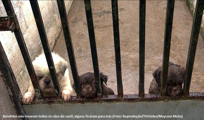 Bandidos rendem funcionários e levam 40 cães de canil na Grande SP