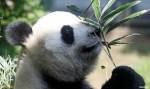 Mulher de 93 anos doa herança a jardim zoológico
