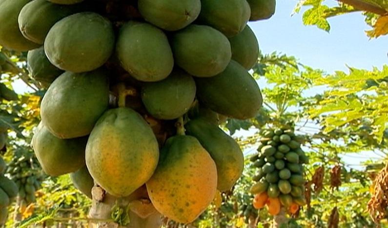 Testes de ONG mostram que 36% dos alimentos têm agrotóxicos acima do limite ou proibidos