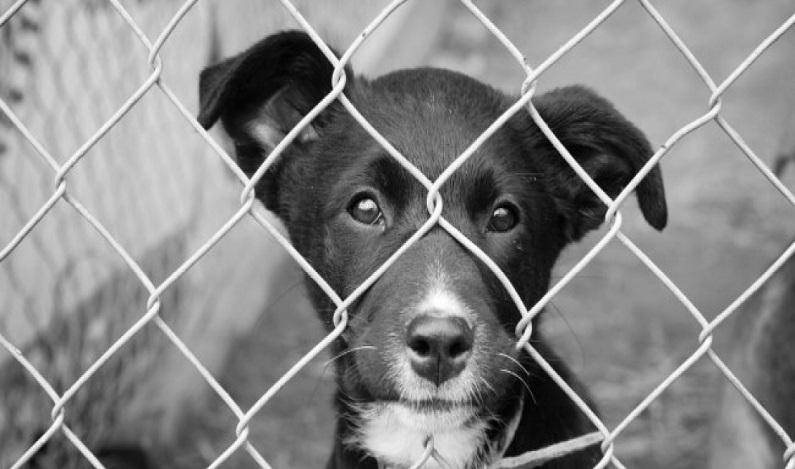 Segurança Pública aprova política contra maus-tratos a animais