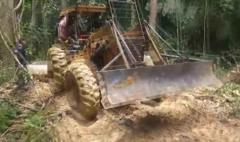 Quatro homens são presos retirando madeiras em reserva florestal de RO