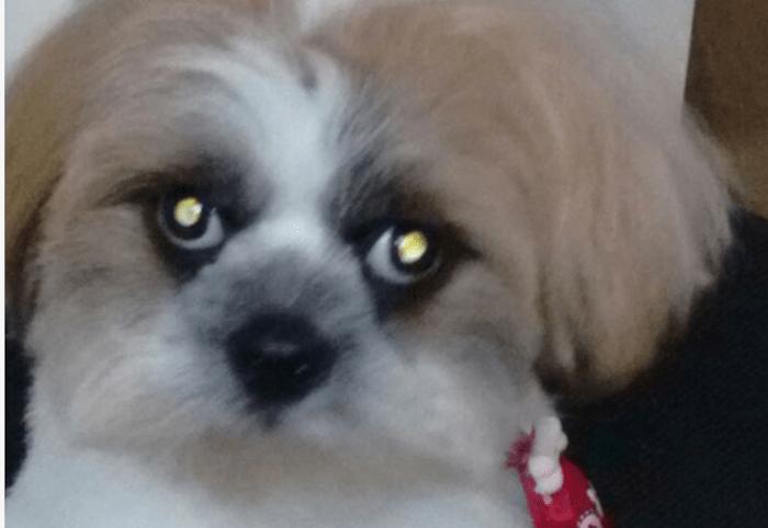 Empresário sequestra cachorro para exigir dinheiro de dívida em Curitiba