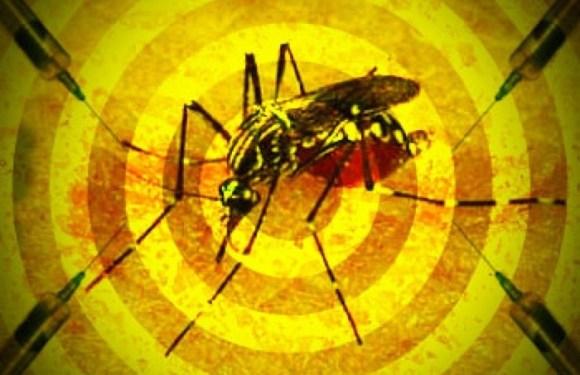 OMS inclui todo o estado de São Paulo em área de risco de febre amarela