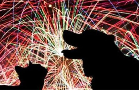 Proibição de fogos de artifício com barulho será votada pelo Senado