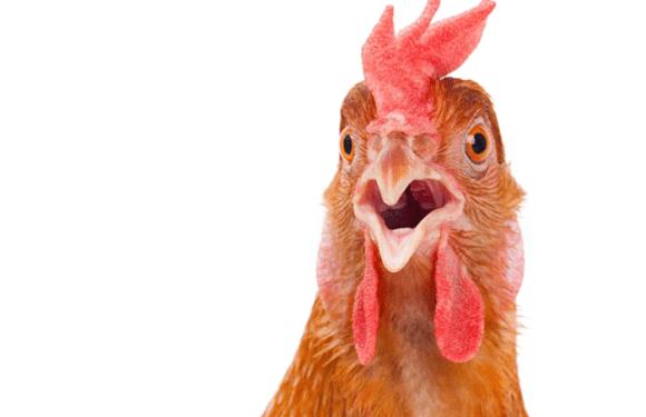 Dinheiro do BNDES nunca foi tão bem empregado como nos empréstimos à JBS; e o que o frango tem a ver com isso