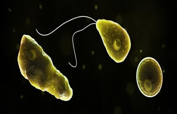 Argentina tem primeiro caso de ameba que 'come cérebro'
