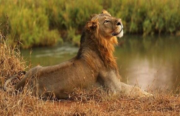 Leões, tigres, jaguar e urso fogem de zoológico e geram caos em cidade alemã