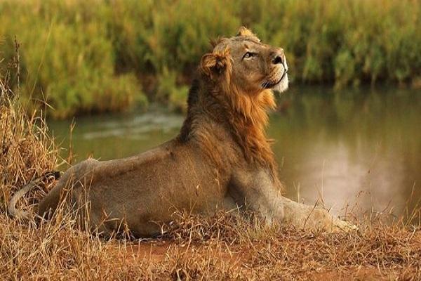 Suspeito de caça ilegal é devorado por leões na África do Sul