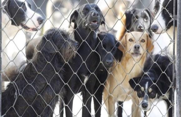 Subsecretária denuncia venda de vagas para castração de animais na rede pública por R$ 300