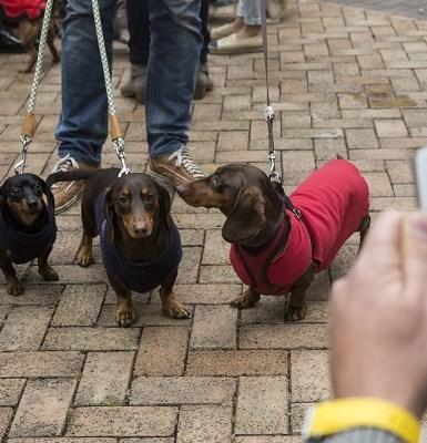 Mulher morre após ser atacada por 7 cães de pequeno porte nos EUA