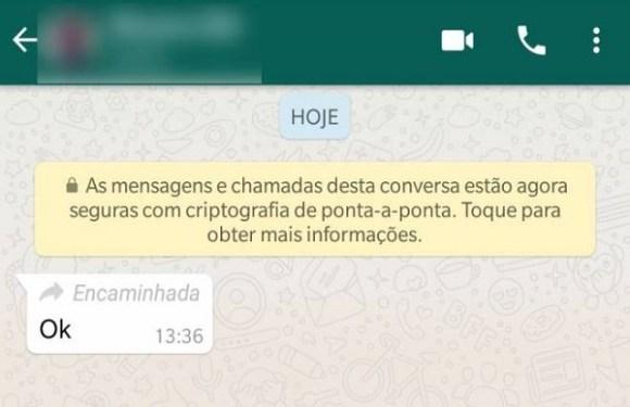 WhatsApp libera para todos função que dedura mensagens encaminhadas
