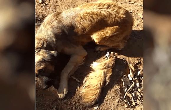 Idoso é detido por cortar rabo de cachorro com facão por soltar muito pelo, diz polícia