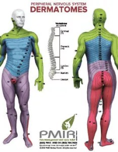 Click here to view and download our dermatome chart also dermatomes  diagnostic tool pain injury relief rh paininjuryrelief
