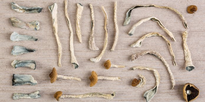 History of microdosing mushrooms for pain