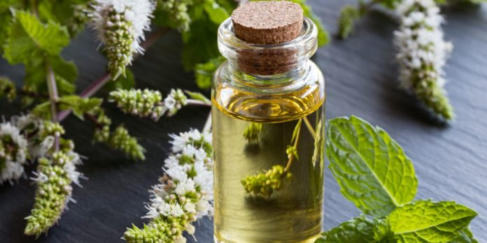 Peppermint Essential Oils for Chronic Pain