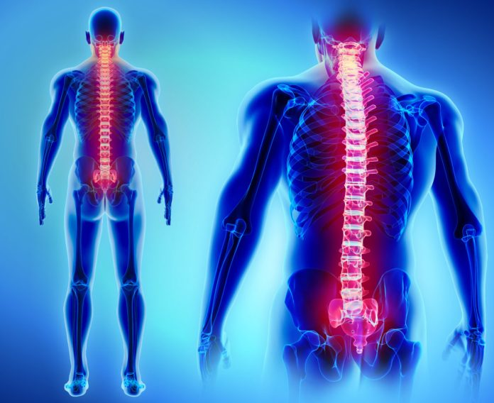 illustration of spine health