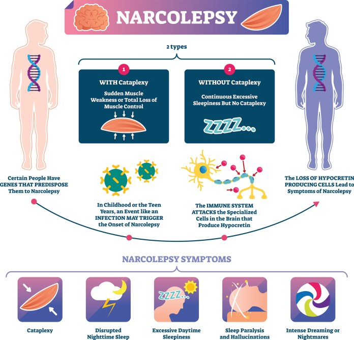 two main types of narcolepsy