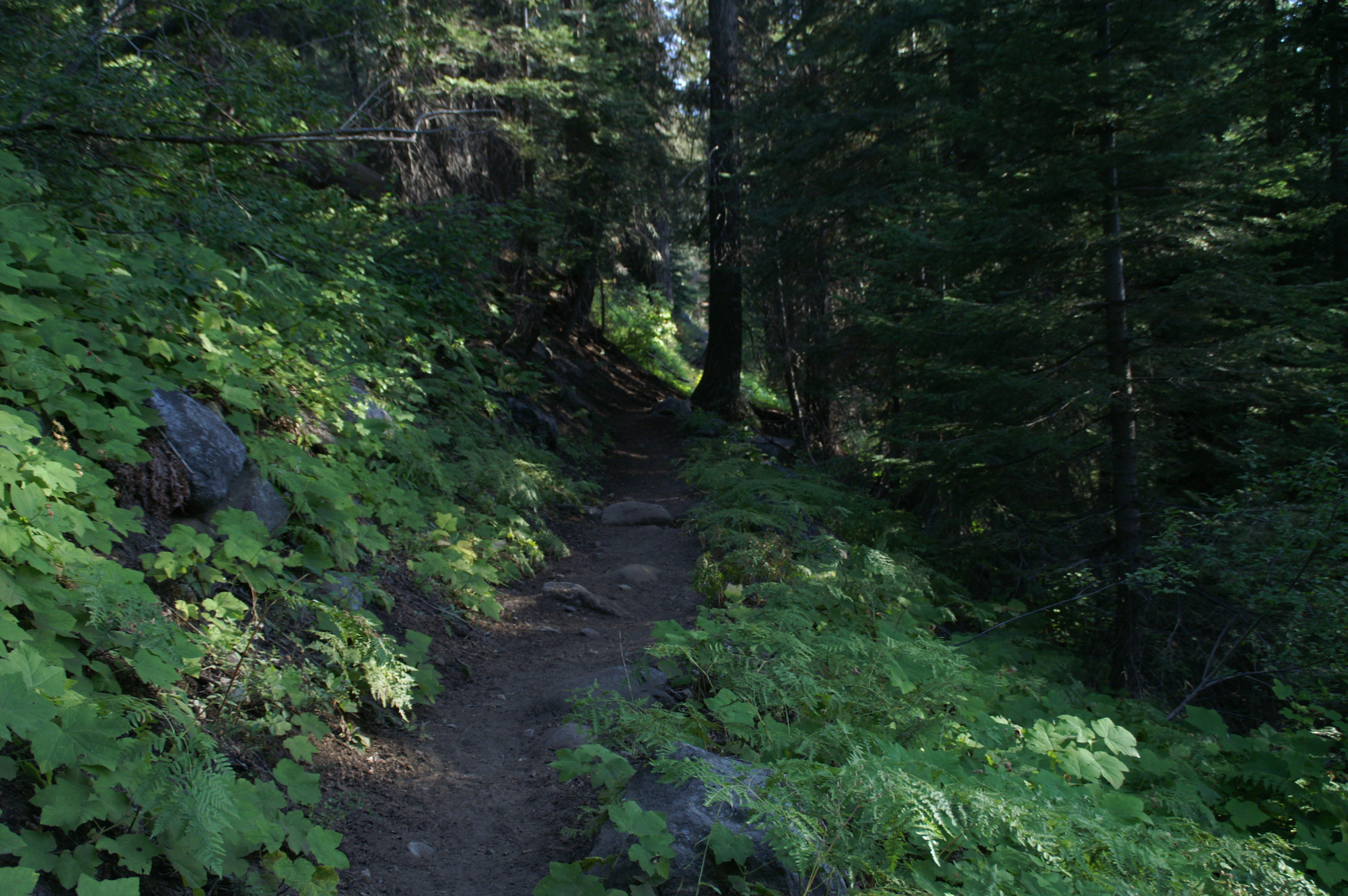 Come with me on the High Sierra Trail