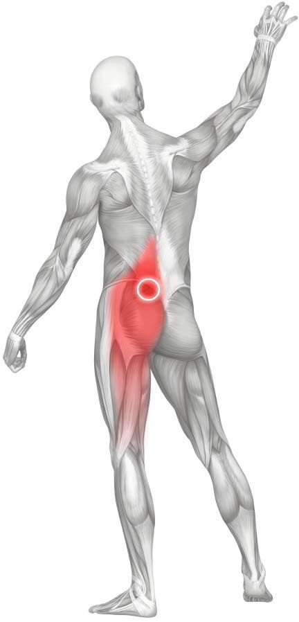 Lower Back Muscles Diagram Pain : lower, muscles, diagram, Massage, Upper, Gluteal, (Gluteus, Maximus)