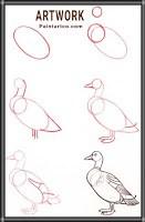 تعليم الرسم للاطفال رسومات اطفال رسم بطة