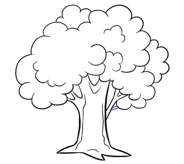 رسم جذع الشجرة رسم شجره سهله رسومات سهله للاطفال