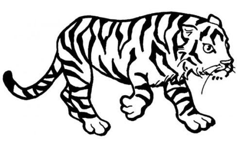 حيوانات الغابة للتلوين للاطفال رسمة نمر