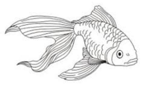 كائنات بحرية وأسماك للتلوين