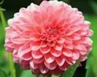 اجمل الورود الطبيعية