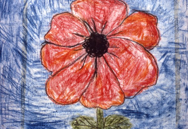Drawing of a red flower in bloom