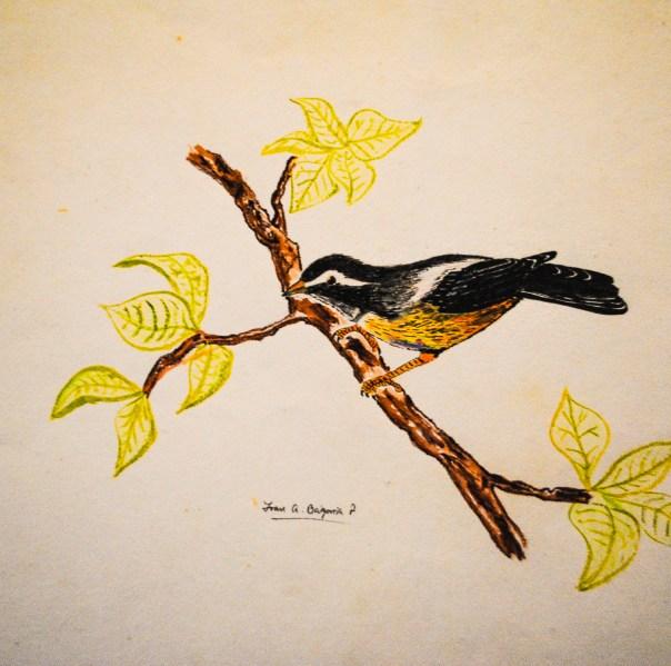 Bird Study