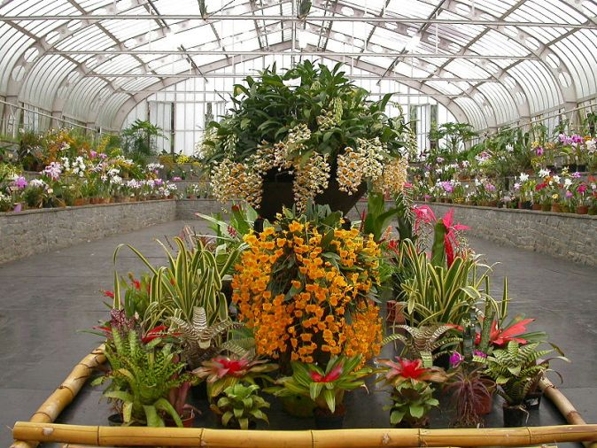 800px-Orchid_show_in_Sao_Paulo