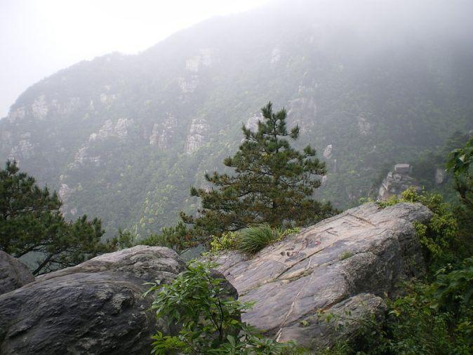 800px-Pinus_hwangshanensis_Lushan_3