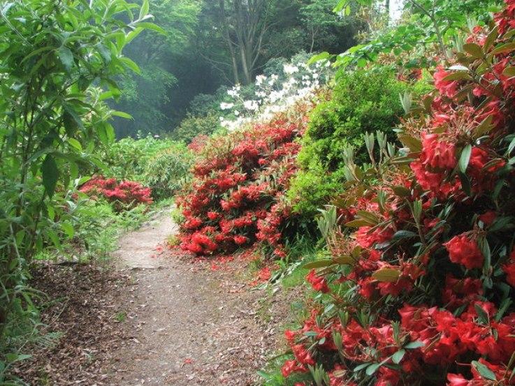 Achamore_Gardens,_Gigha._-_geograph.org.uk_-_180688