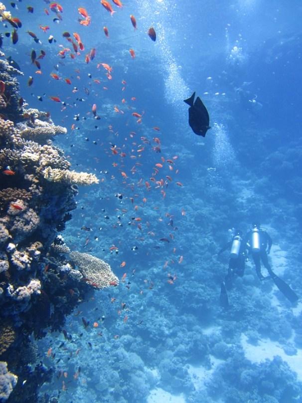 divers-123286_960_720