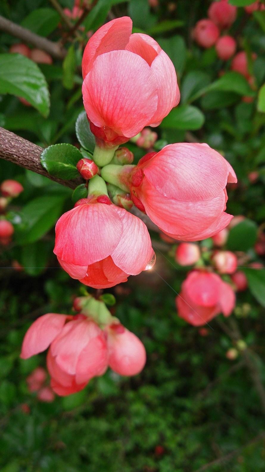 flower_flowers_garden_flowers_plant_beautiful_flowers_pink_pink_flower_beautiful_flower-1401111.jpg!d