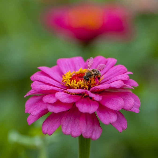 insects-3077655_960_720