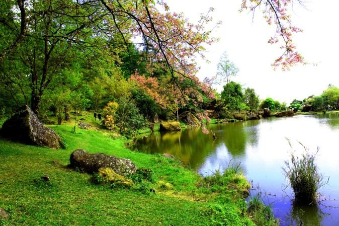 tree-nature-sakura-beautiful-pink-cherry-1580659-pxhere.com