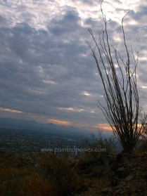 Cloudy Sky and Ocotillo