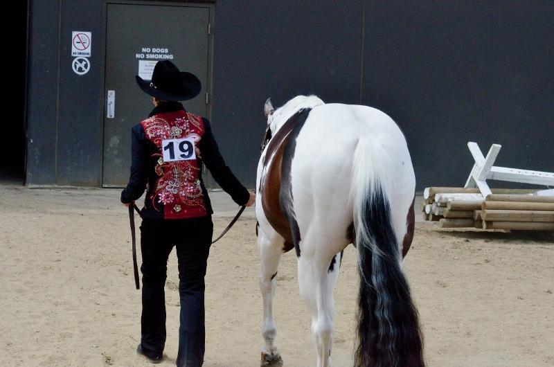 Canada top western pleasure stallion