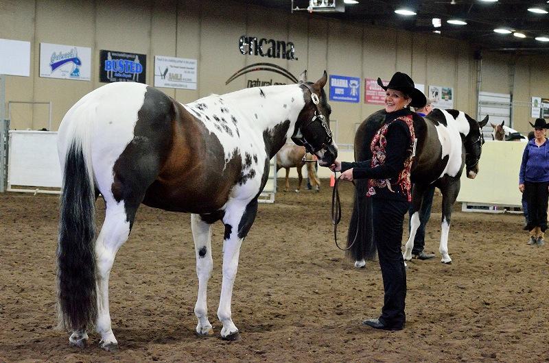 APHA Superior Trail Stallion