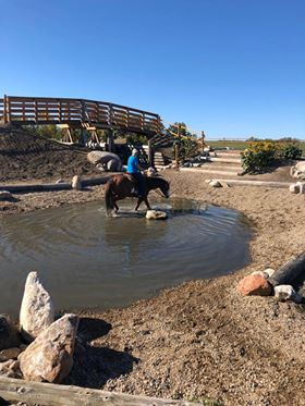 Trail horse in pond with rider