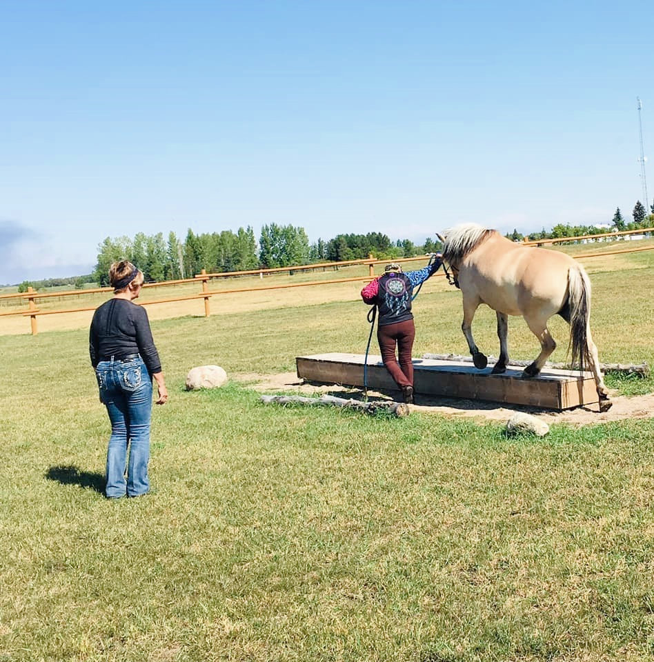 Handler leading horse over balance beam obstacle