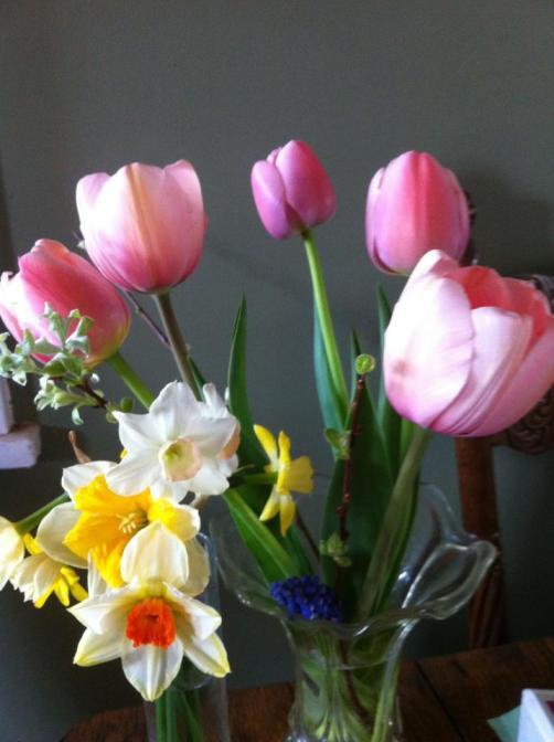 tulips and daffs