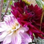 Заказать картину-Цветы16