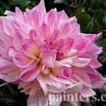 Заказать картину-Цветы22