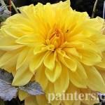 Картина на заказ-цветы1