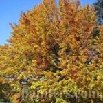 Фото-Осень золотая-заказать картину по фотографии