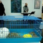Кроликовый интерьер выставки