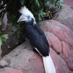 Фауна Индонезийских островов,птицы