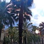 Королевская площадь Барселоны 8